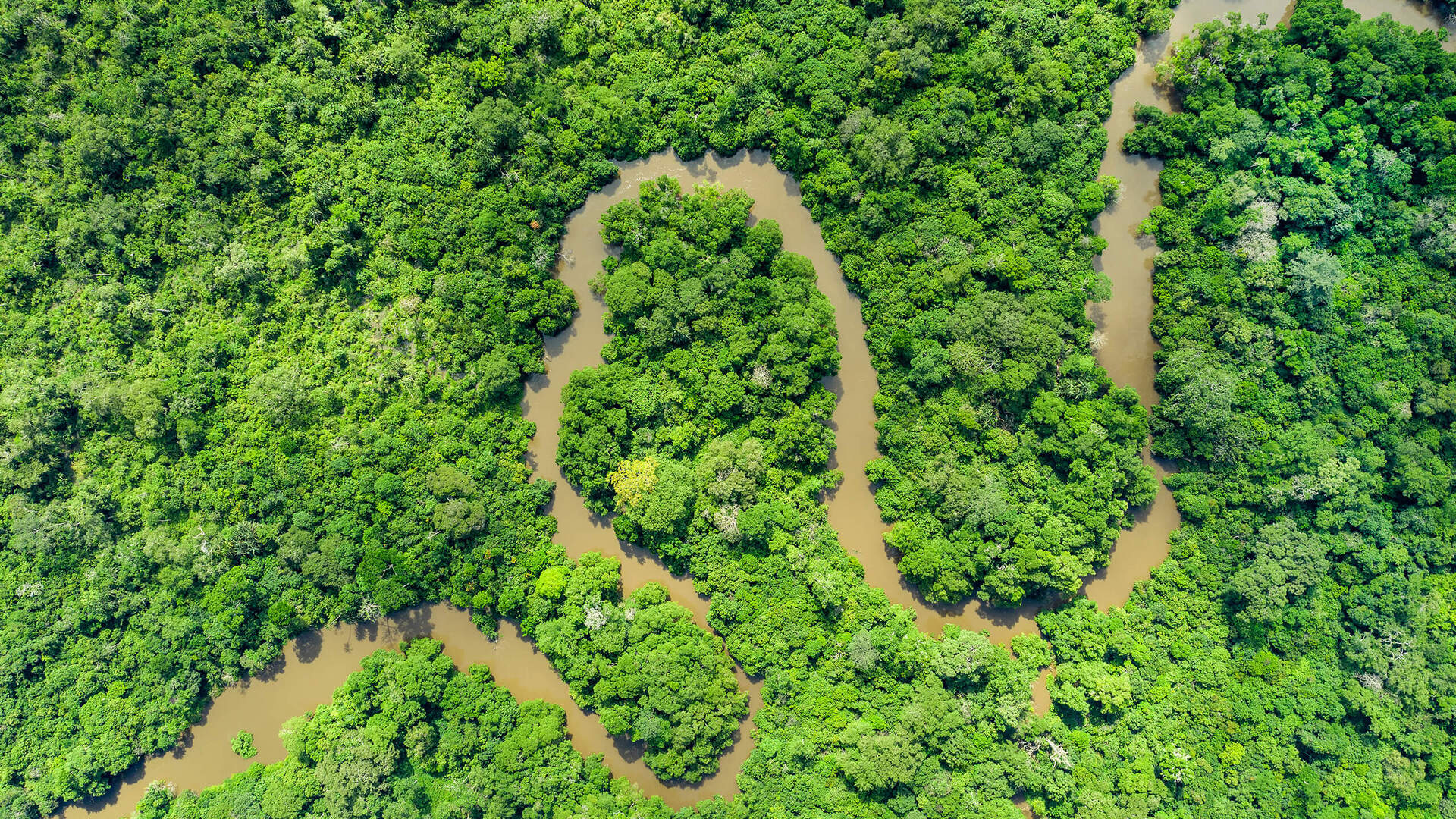 river snaking through forest from above